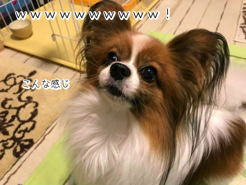 ocIa5ZNj草6