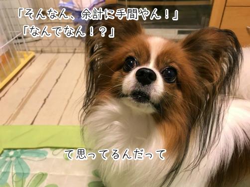 GPRj3Sb2草13
