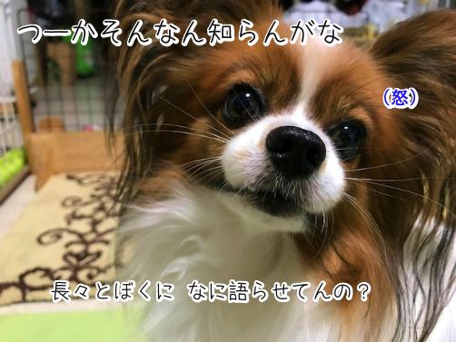 ooqqkeil草14