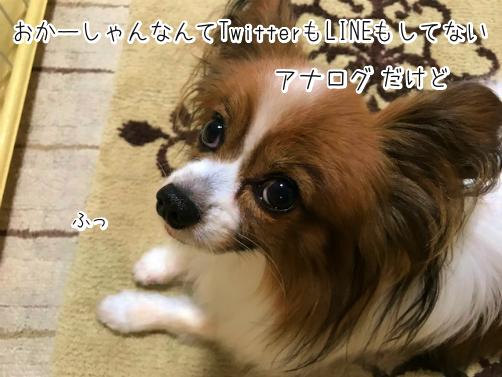 RiRlZ_qDわかもの4