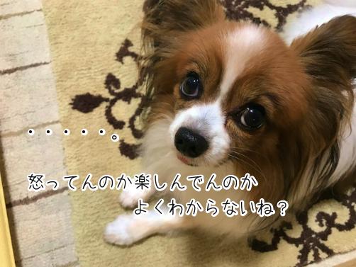 mTkYol6Pわかもの10
