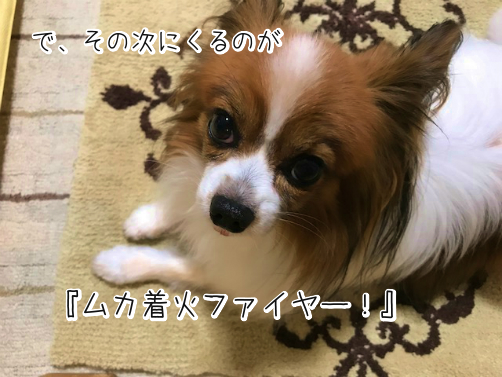 on8MID41わかもの11