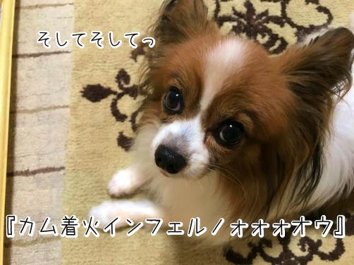 xsKPie_Xわかもの13