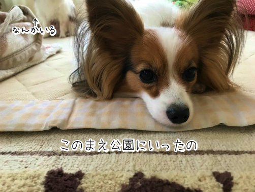 raWD8vu_じょし1