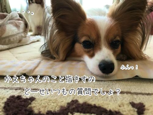 6ZF3rOYcじょし8