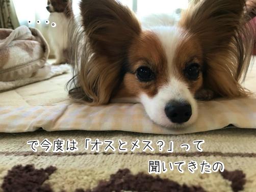 tIwICrLLじょし6