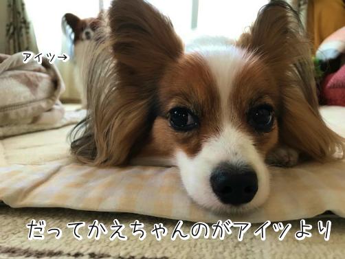 yEGONOVIじょし11