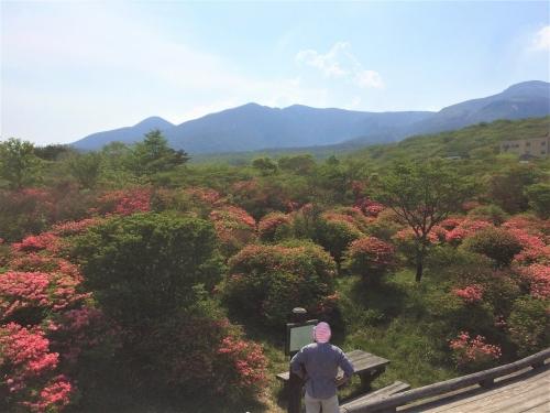八幡のつつじ群生地 (2)