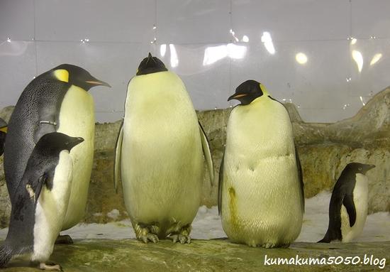 ペンギン_6