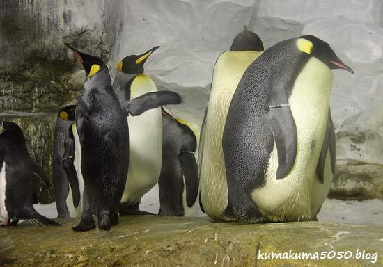 ペンギン_7