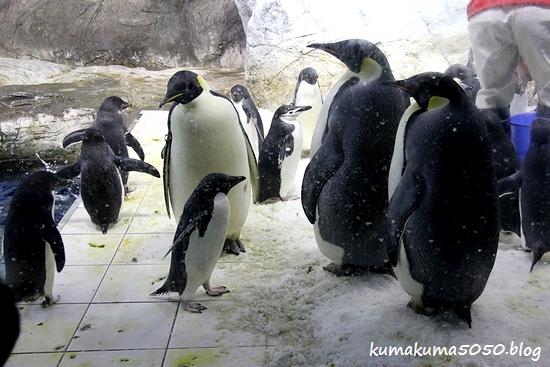 ペンギン_9