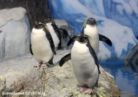 ペンギン_12