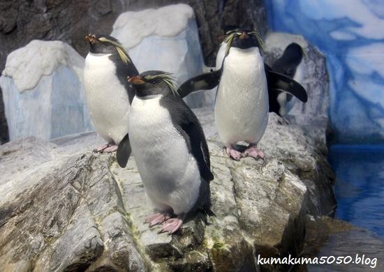 ペンギン_13