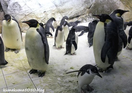 ペンギン_15