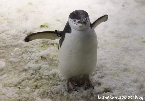 ペンギン_16