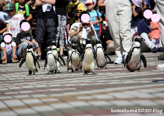 ペンギン_22