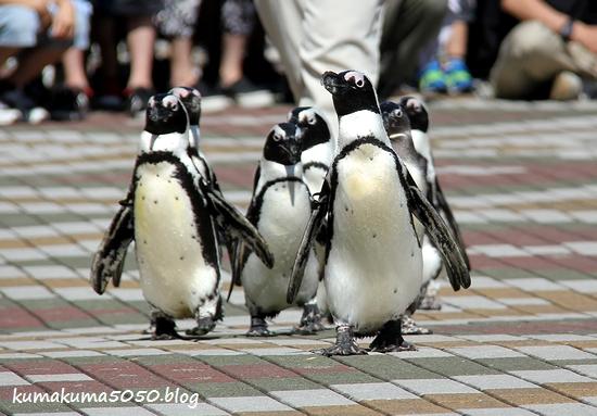 ペンギン_23