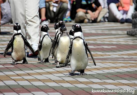 ペンギン_24
