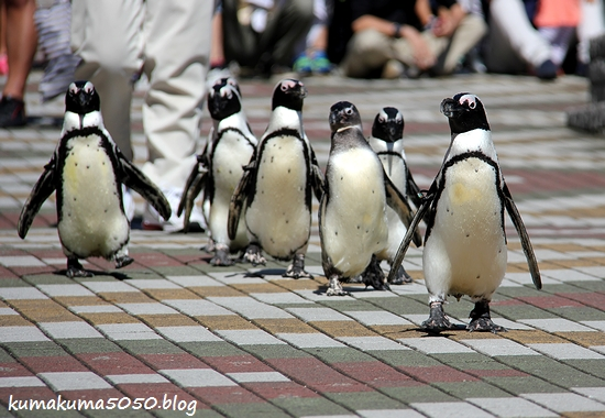 ペンギン_25