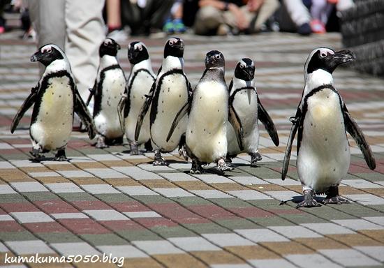 ペンギン_26