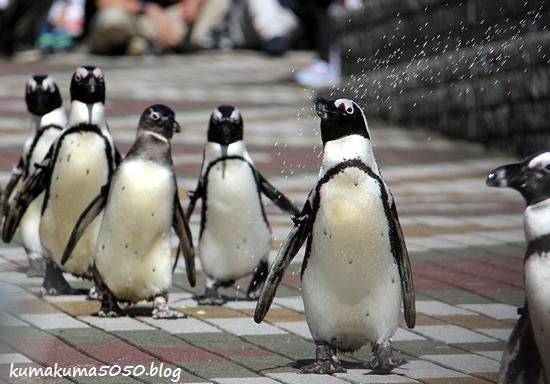 ペンギン_27