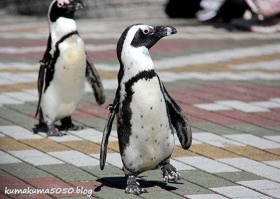 ペンギン_28