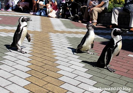 ペンギン_30