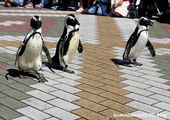 ペンギン_31