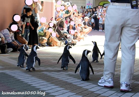 ペンギン_33