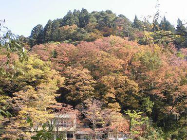 apotakouyou1105-8.jpg