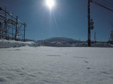 ayukidaruma0114-1.jpg