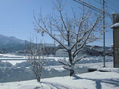 ayukidaruma0114-3.jpg