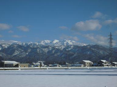 ayukidaruma0114-4.jpg