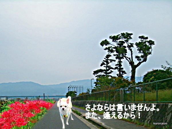 GEDC0134-001.jpg