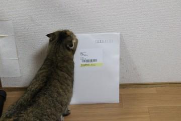 suzu826.jpg