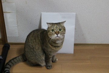 suzu827.jpg
