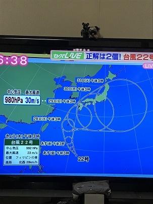 台風のニュース