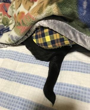 まだ、寝てたい・・・