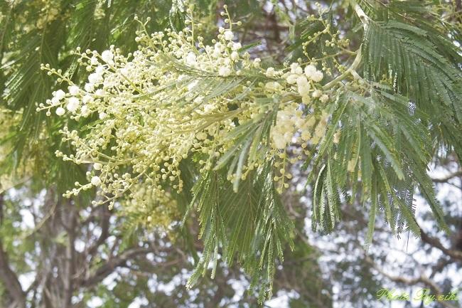 青海南ふ頭公園のお花の写真