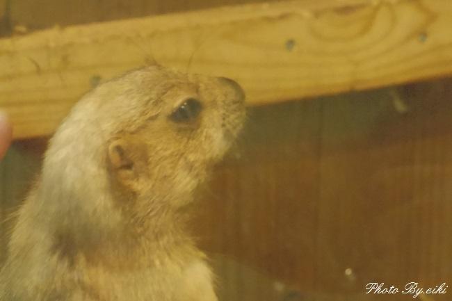 埼玉県こども動物自然公園の大黒プレー利ドッグの写真