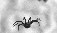 1001蜘蛛3
