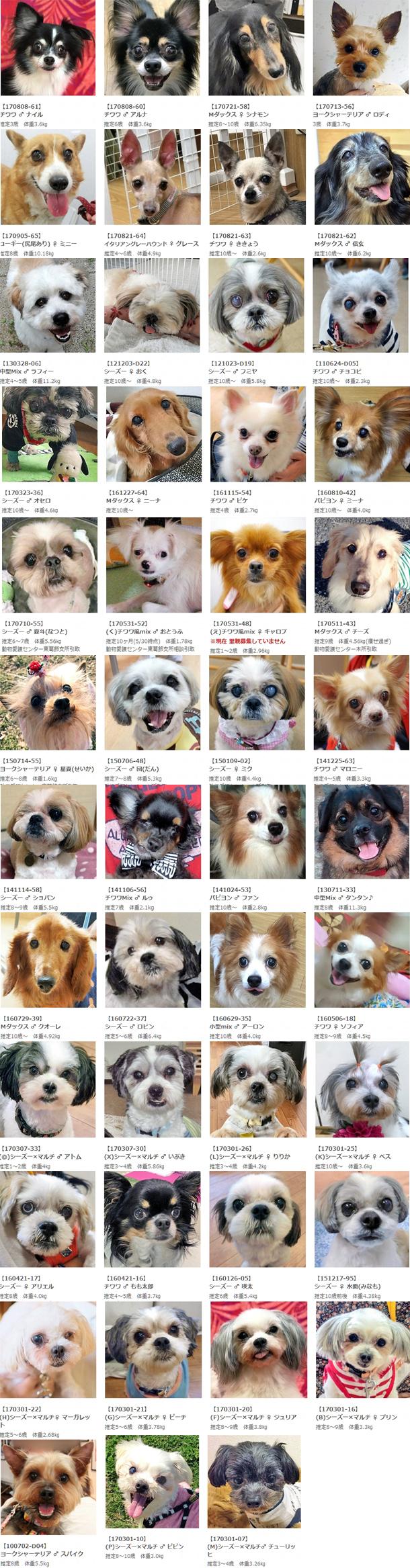 2017秋保護犬リスト