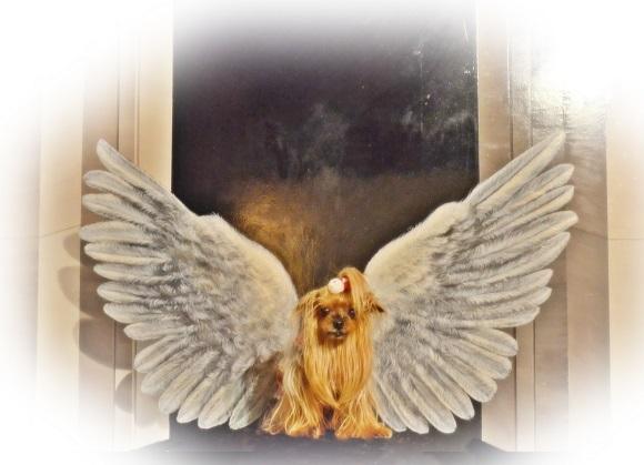 DSC_0603 ar (天使の羽のパコ)P1