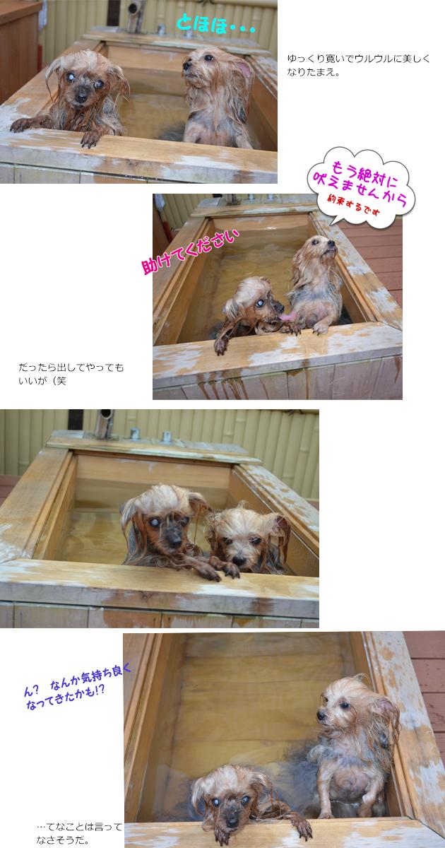 リーパコと温泉露天風呂②
