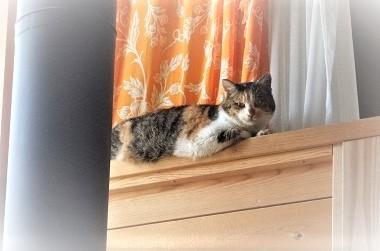 家猫ミケ子
