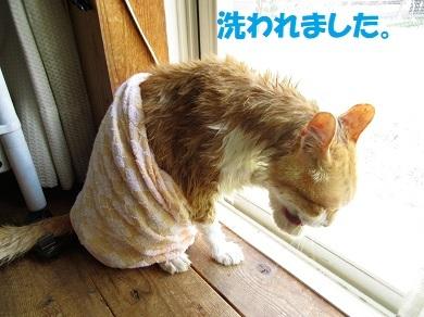 洗われました。