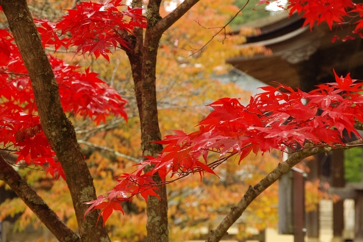 2018年10月30日 高野山紅葉ツーリング (8)