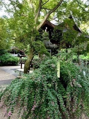梨木神社の萩1709