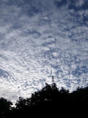 長雨の合間のうろこ雲1710