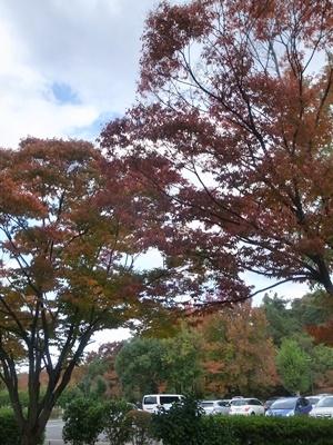 黄檗の紅葉1710